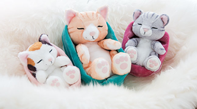 Bildzuschnitt_Sleeping_Kitties_647x360px